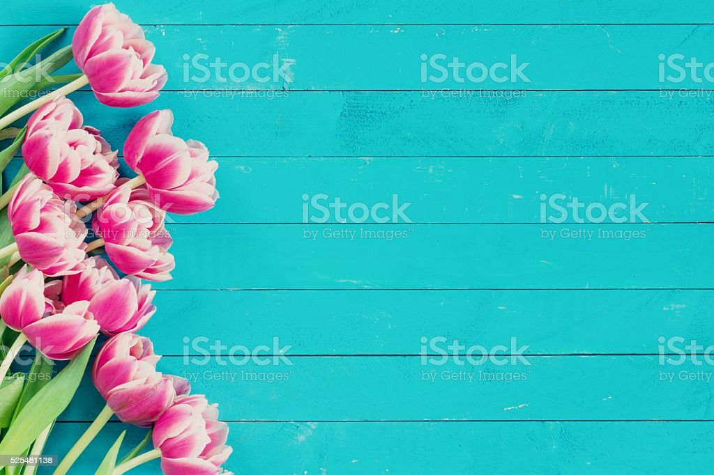 Floral background blue wooden backdrop and pink flowers stock photo floral background blue wooden backdrop and pink flowers royalty free stock photo mightylinksfo