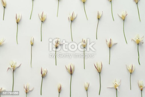 612015846 istock photo floral background ,composition flat lay 531794586