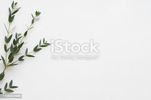 Minimalist floral composition. Eucalyptus on white background. Aroma therapy. Copy space.