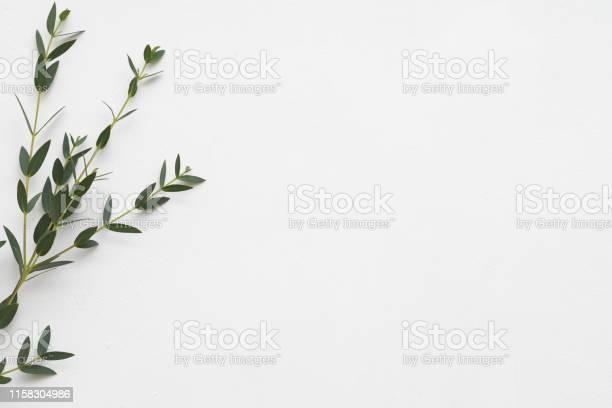 Floral background eucalyptus aroma therapy picture id1158304986?b=1&k=6&m=1158304986&s=612x612&h=dxixx ae tcdmmu0lie1csw1w8 pd6m6efuaiqvbc8y=