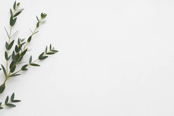 Floral background eucalyptus aroma therapy picture id1158304986?b=1&k=6&m=1158304986&s=612x612&w=0&h=qwktnrphhg0ksylw8ikzdnmcqocino7fffhmvlwuhsc=