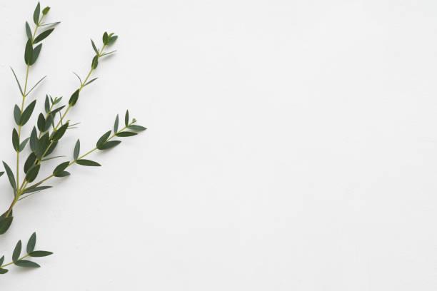 terapia aromatica di eucalipto di fondo floreale - flat lay foto e immagini stock