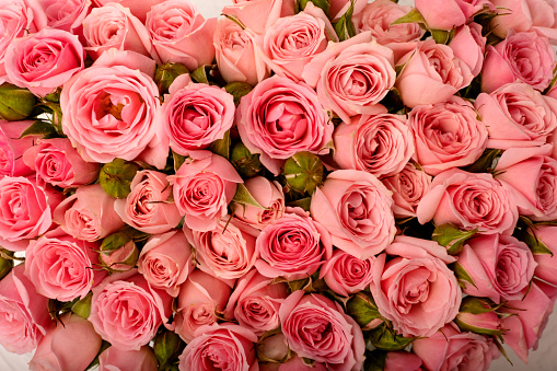 Floral background of pink roses close up