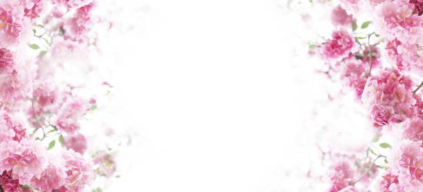 Floral background picture id1128809331?b=1&k=6&m=1128809331&s=612x612&w=0&h=mosqqfrpodfsbn jfnlqovokpdrugjgkjglb bpngj8=