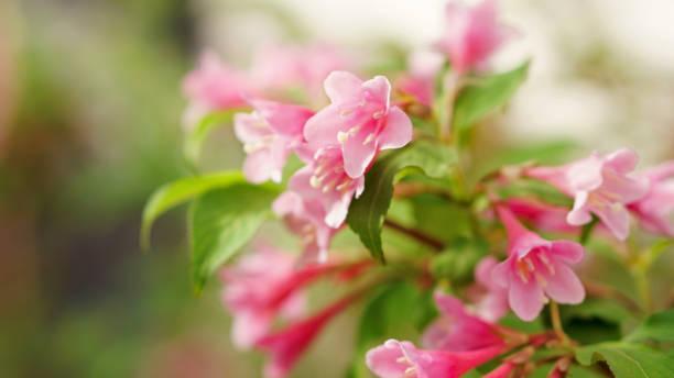 Floral background picture id1165228558?b=1&k=6&m=1165228558&s=612x612&w=0&h=mqatn3esiw7l1zr6bxd57vwe ucow9jmrissd8acuie=