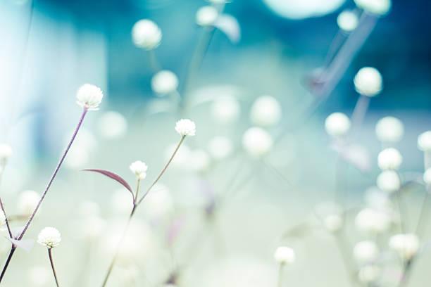 Floral background picture id576738060?b=1&k=6&m=576738060&s=612x612&w=0&h= cr0ofugkidzojuhcsdoty3fphrwfvac1zwur e0lfo=