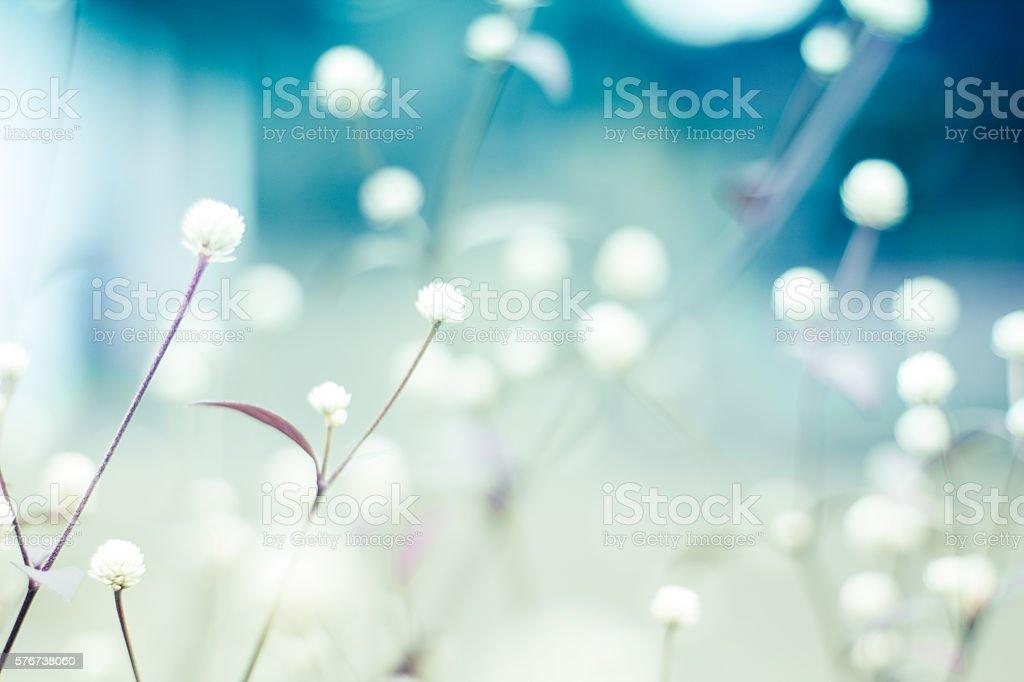 Floral Hintergrund – Foto