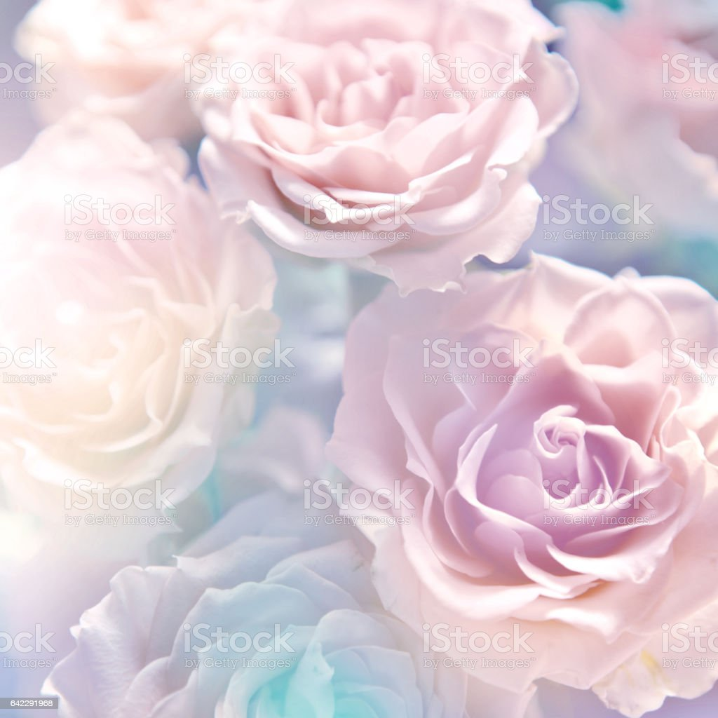 pictures of flowers with soft coloured filters applied, that are...