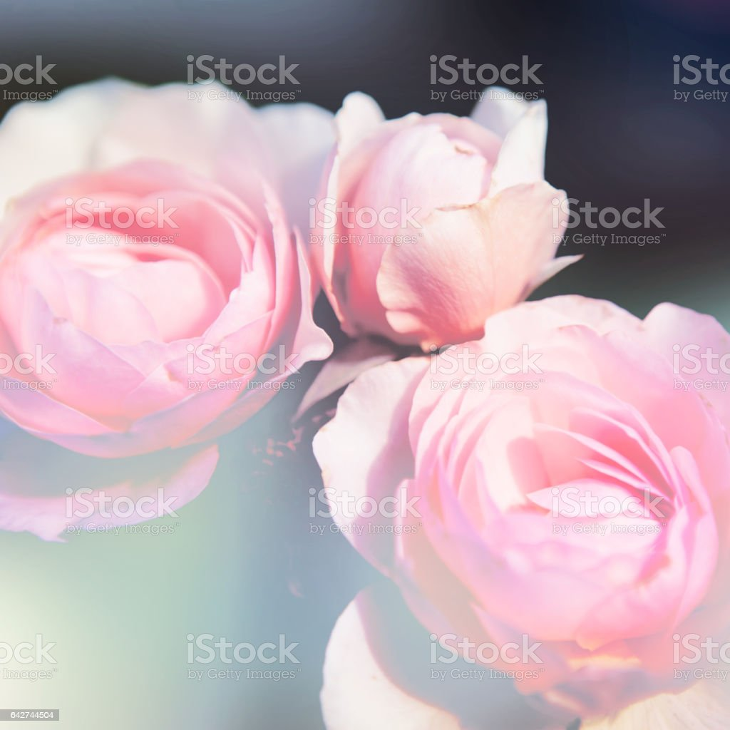 floral background stock photo