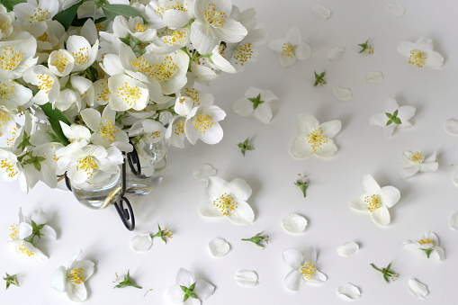 Floral background with bouquet of white jasmine flowers. Mock-orange Philadelphus.
