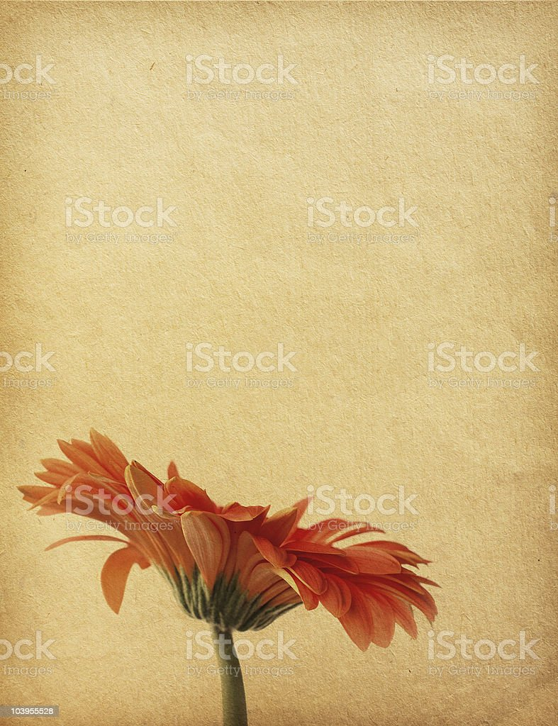 floral background with space for text or image. royalty-free stock photo