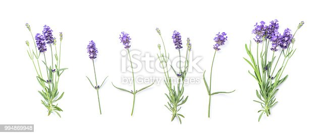 Floral banner flat lay. Lavender flowers isolated on white background