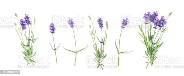 Floral banner flat lay lavender flowers picture id994869948?b=1&k=6&m=994869948&s=612x612&h=klyljgqlkxw q qjfl7eqxw9c6mdttw5rj0gnxae3pq=