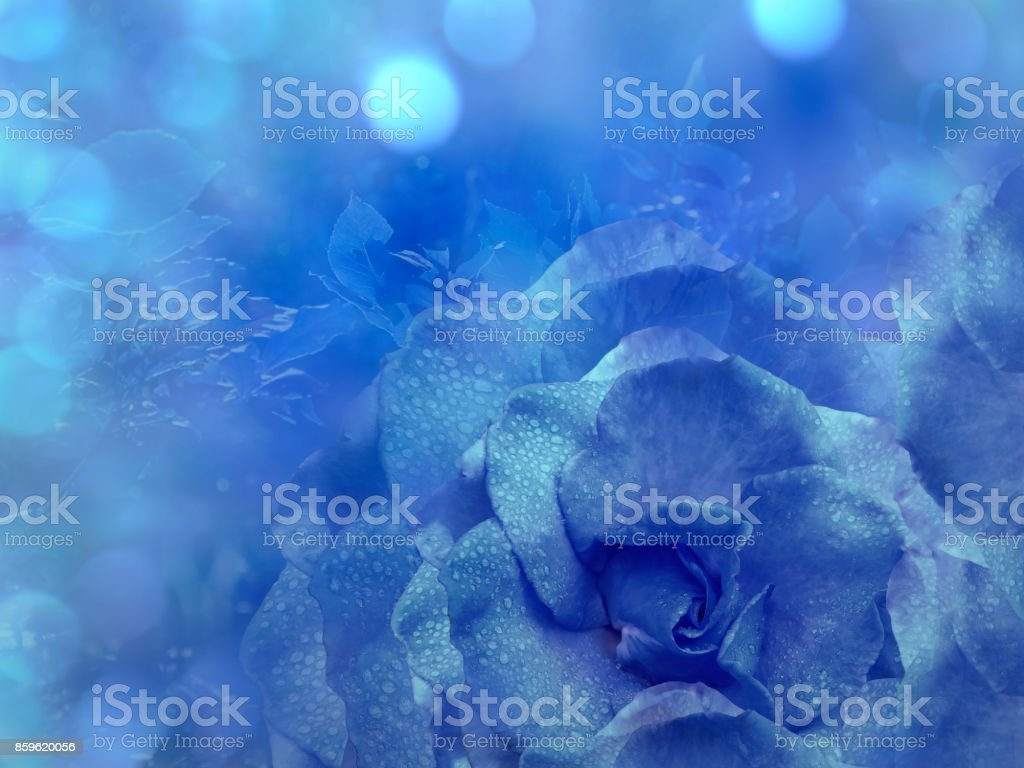 Floral Blue Background From Rose Flowers Composition A