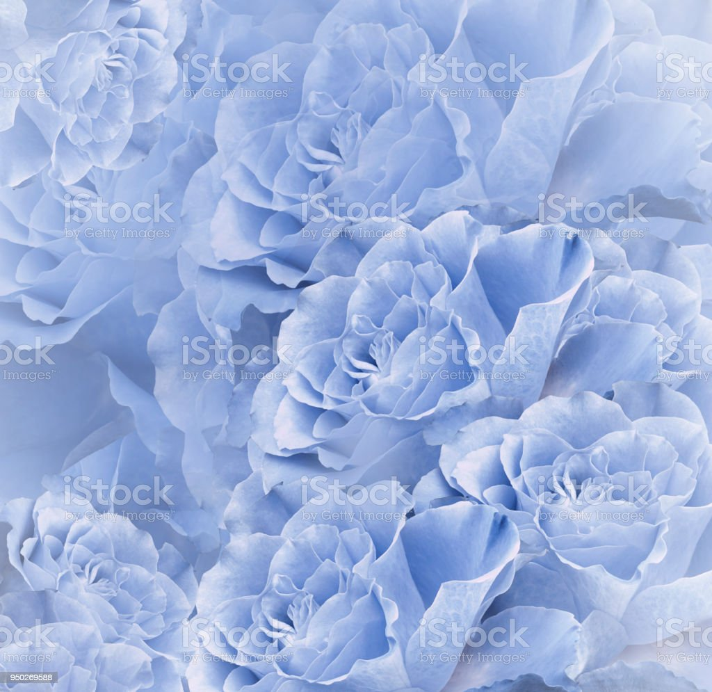 Floral Blue Beautiful Background Flower Composition Bouquet Of
