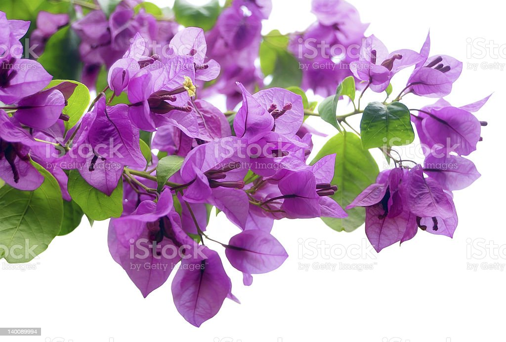 Floral border isolated on white stock photo