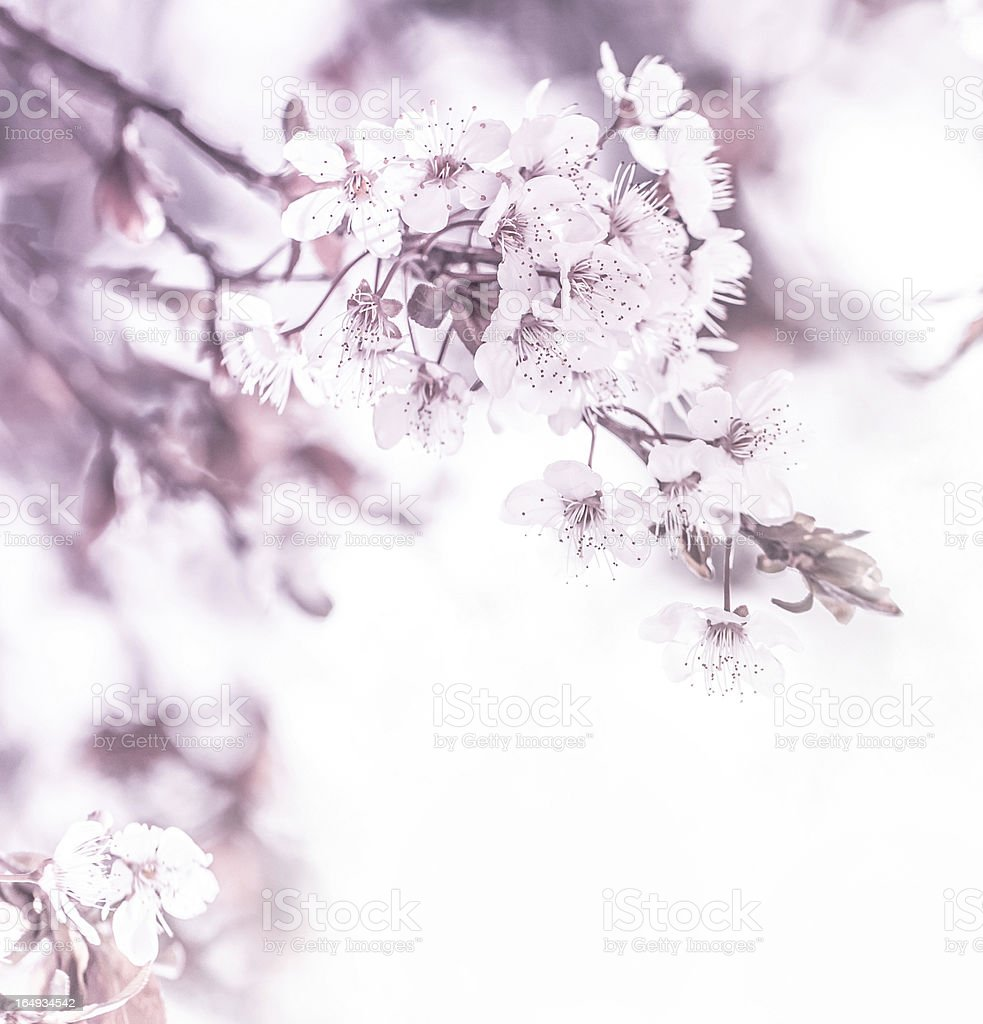 Floral border royalty-free stock photo