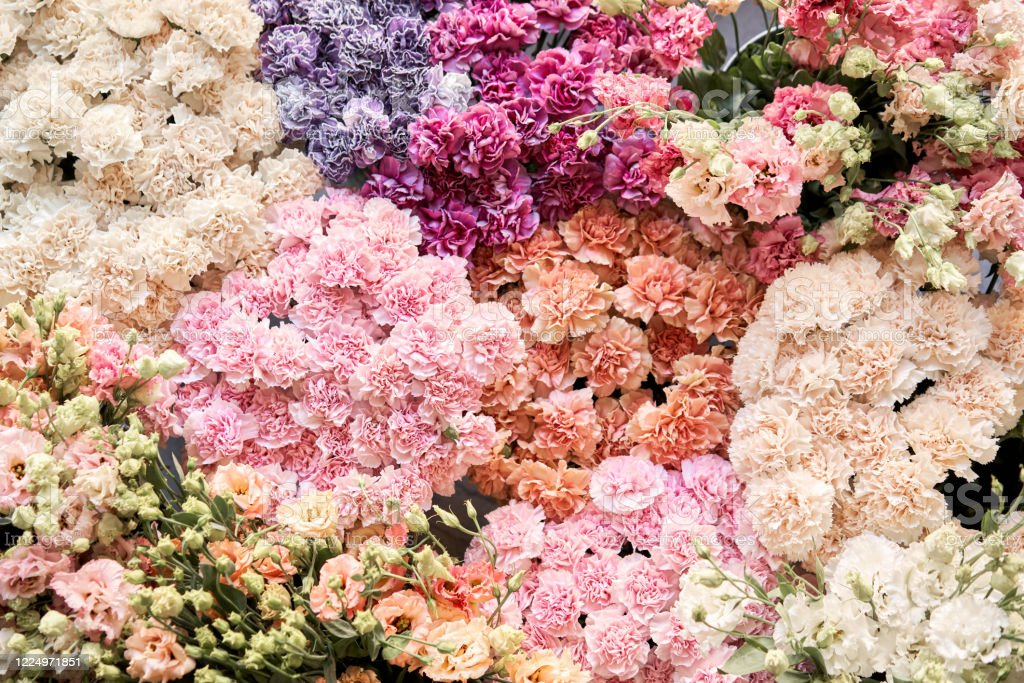 Floral Carpet Or Wallpaper Background Of Mix Of Flowers Beautiful Flower For Catalog Or Online Store Floral Shop And Delivery Concept Top View Copy Space Stock Photo Download Image Now Istock,Beautiful Nature Flower Gif Images