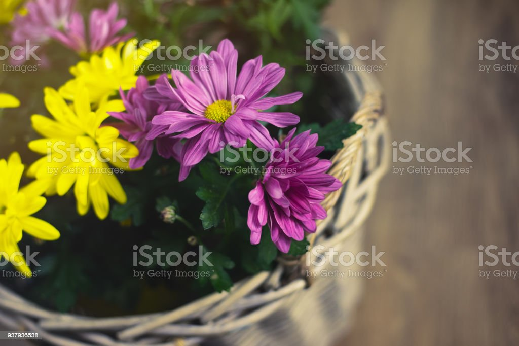 floral compositions stock photo