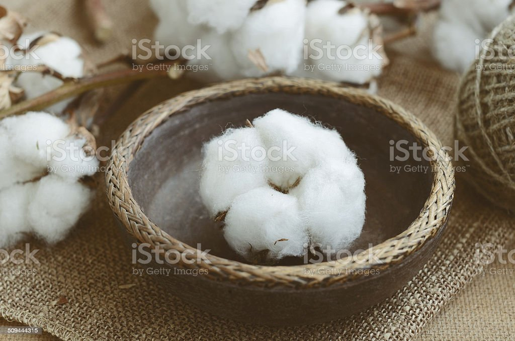 Floral decor with dry cotton flower in vintage wooden bowl stock photo