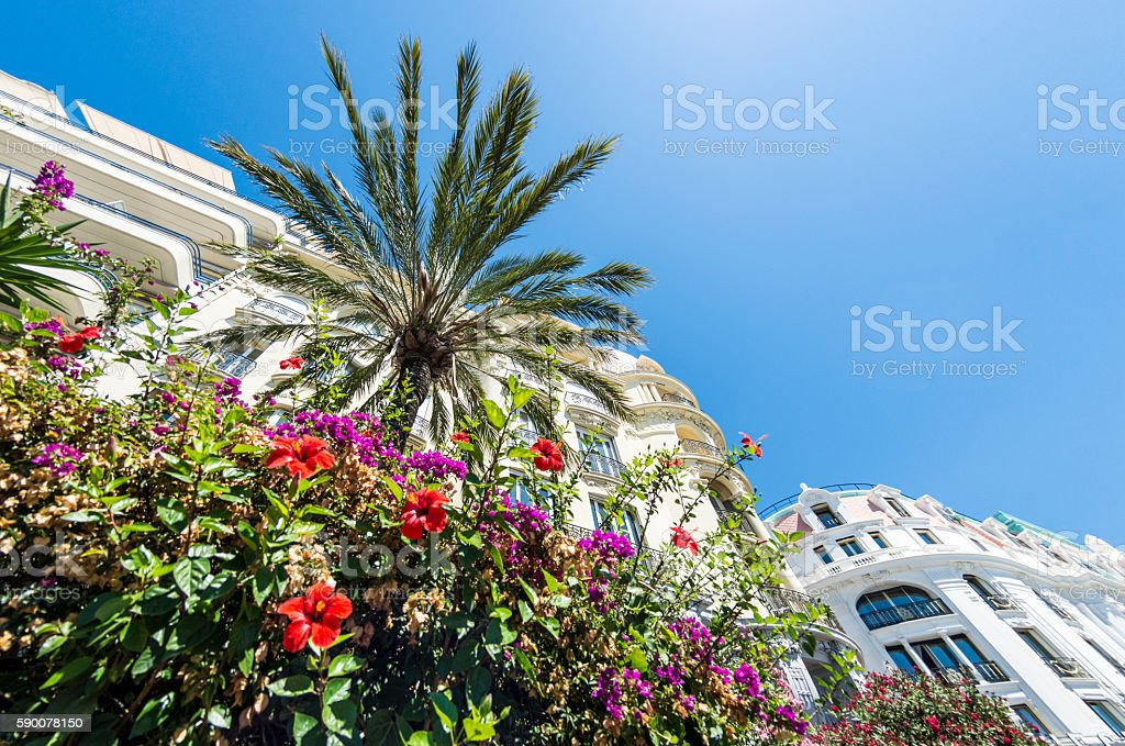 Floral details and palm tree stock photo