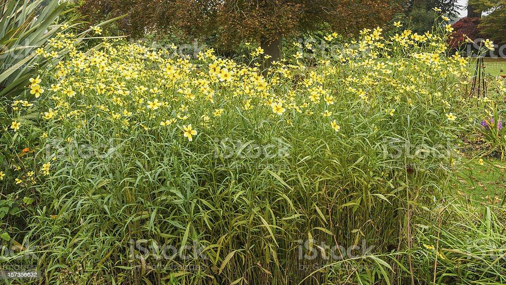 Floral Drift stock photo