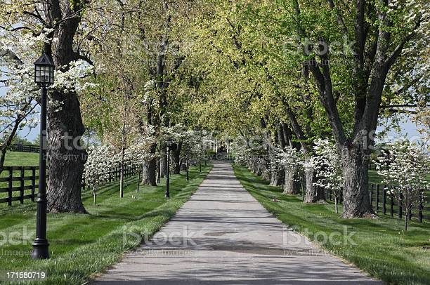 Floral Entrance To A Horse Farm Stock Photo - Download Image Now