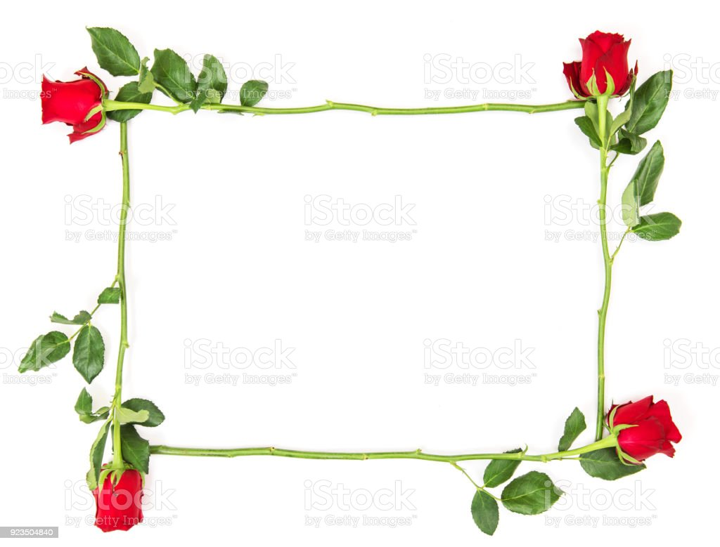 Floral Flat Lay Red Roses Isolated White Background Flower Frame