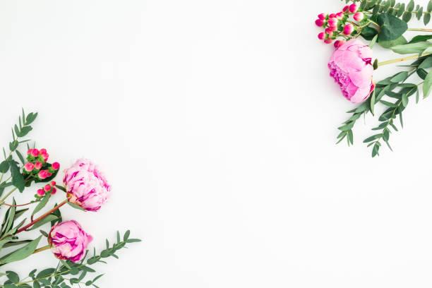Floral RahmenZusammensetzung mit Sträußen von rosa Pfingstrosen und Eukalyptus-Zweige auf weißem Hintergrund. Flachliegen, Ansicht von oben – Foto