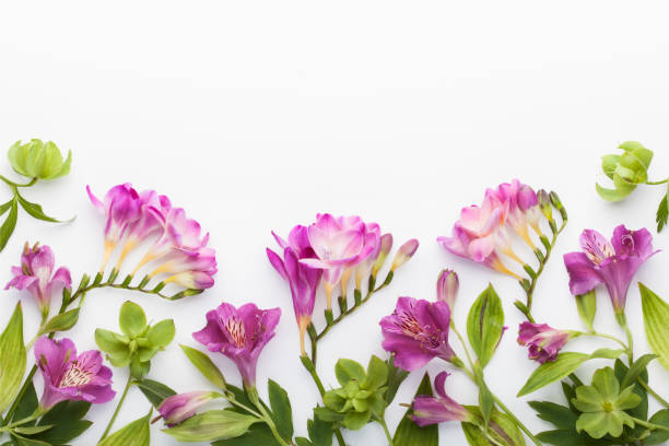 Floral frame made of alstroemerias, freesia flowers and green leaves on white background. stock photo