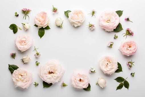 Floral Frame Gemaakt Van Roze Rozen En Groene Bladeren Op Een Witte Achtergrond Stockfoto en meer beelden van Bloem - Plant