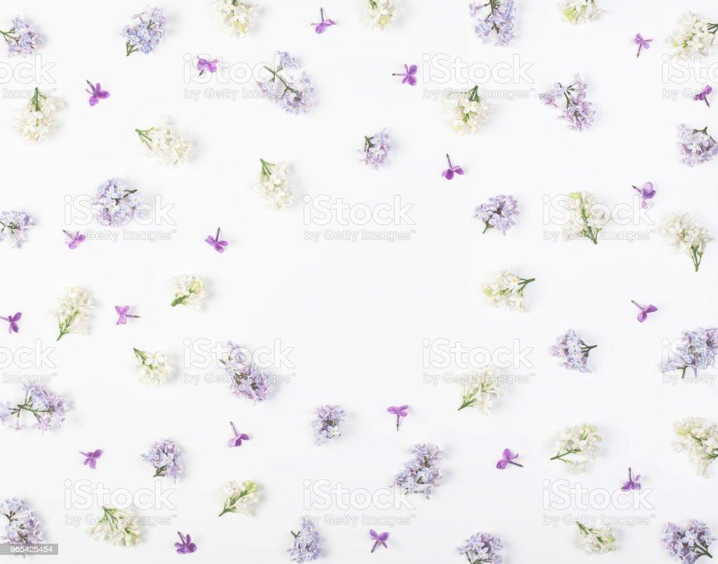 흰색 바탕에 라일락 꽃 격리 하는 봄 꽃 프레임에 의하여 이루어져 있다. 복사 공간 최고 볼 수 있습니다. 플랫이 하다. - 로열티 프리 0명 스톡 사진