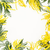 Floral frame of acacia flower branches on white background. Flowers for woman day. Flat lay, top view.
