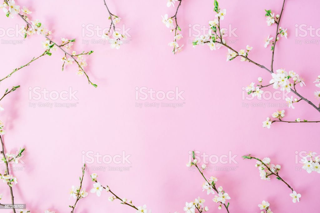 Blumenrahmen Weiße Blumen Auf Rosa Hintergrund Flach Legen Top ...