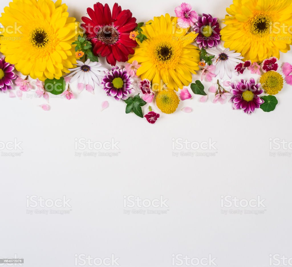 Floral frame on a white background stock photo