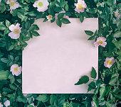 istock Floral frame 957404448