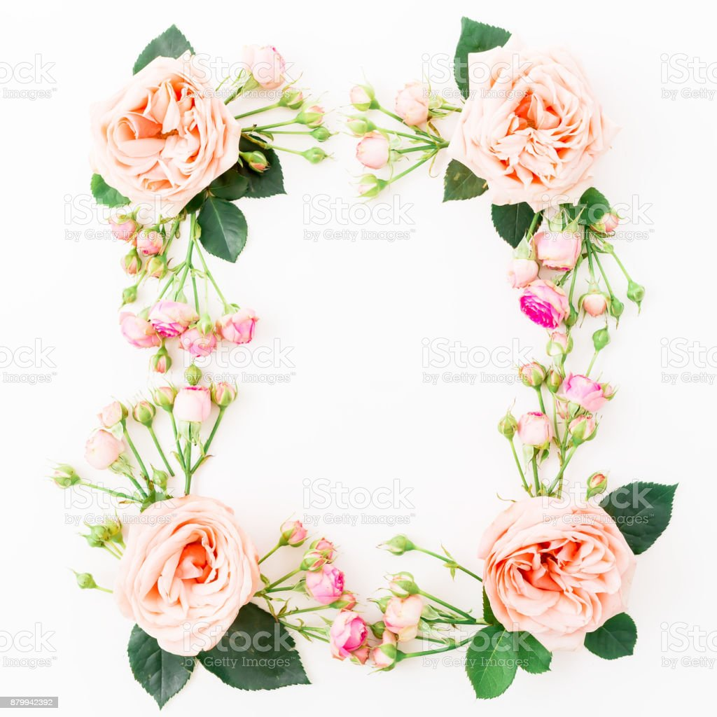 Floral frame with pink roses isolated on white background. Flat lay, top view. Floral background. stock photo