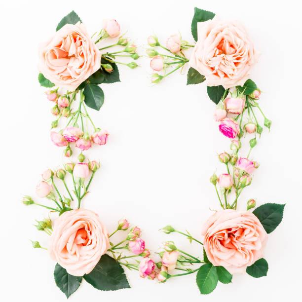 白い背景に分離されたピンクのバラの花のフレーム。フラット横たわっていた、トップ ビュー。花の背景。 ストックフォト