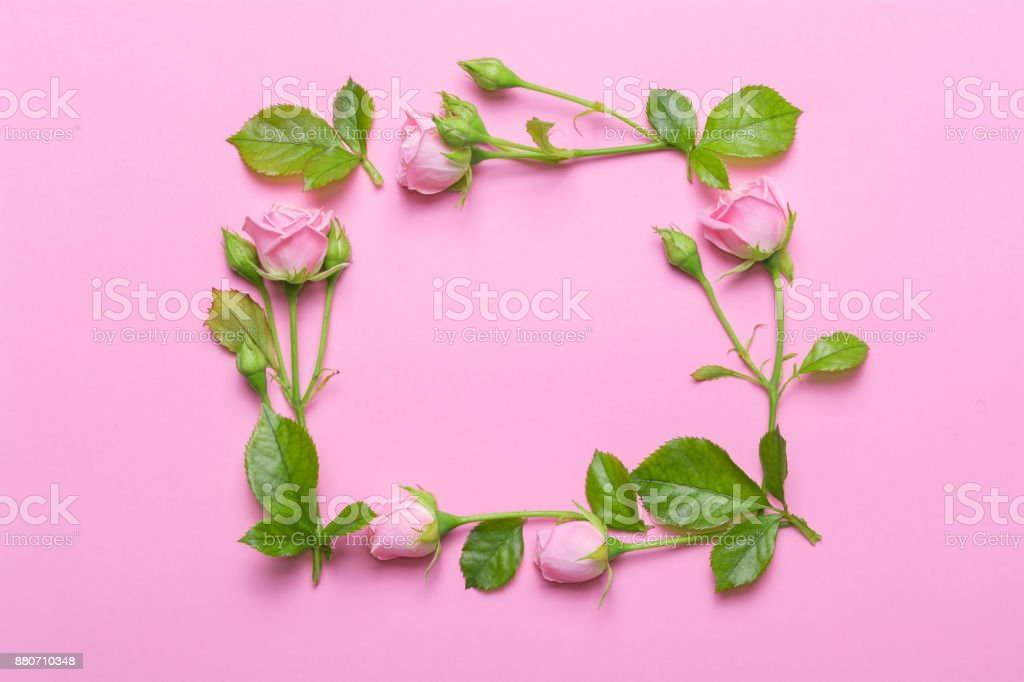 floral frame with pink roses on a pink background corners borders of
