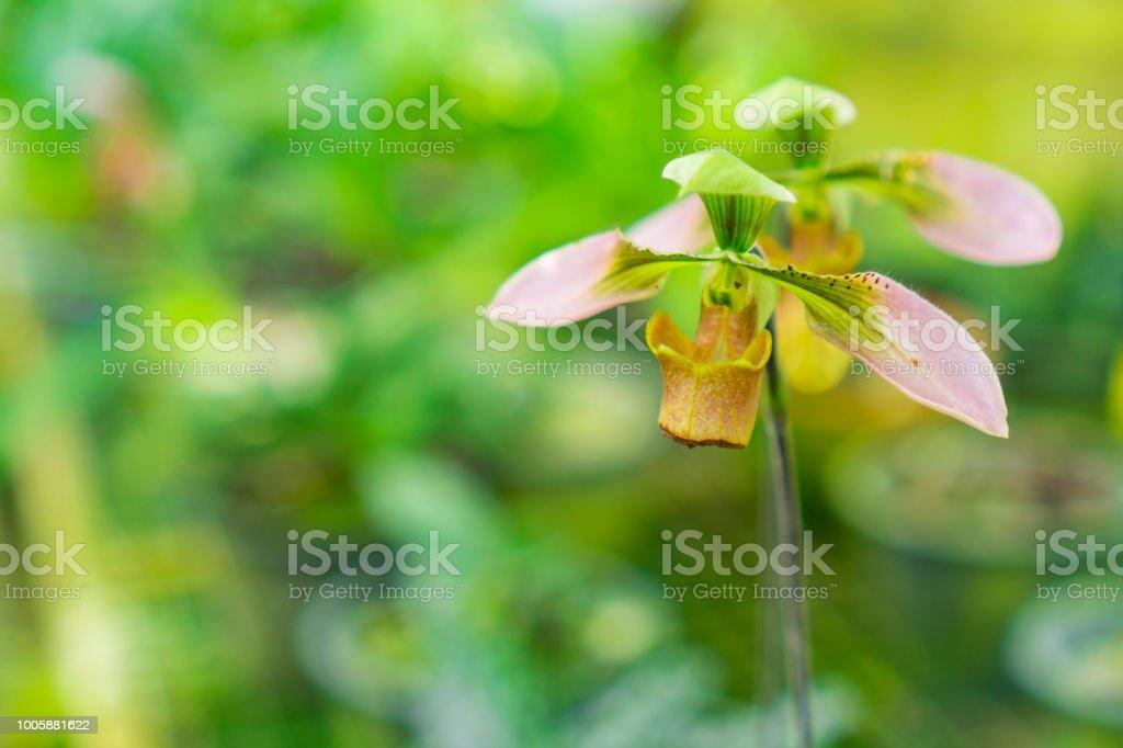 Photo libre de droit de Floral Fond Jardinage Avec Variété ...