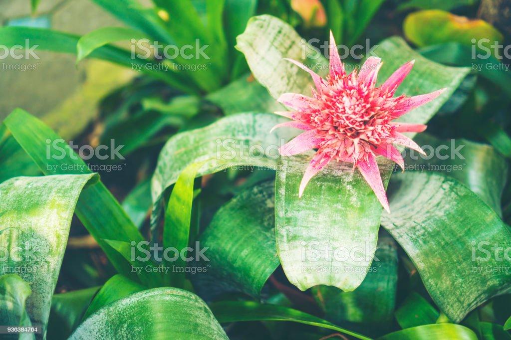 Photo libre de droit de Floral Fond Jardinage Avec Variété De Fleurs ...