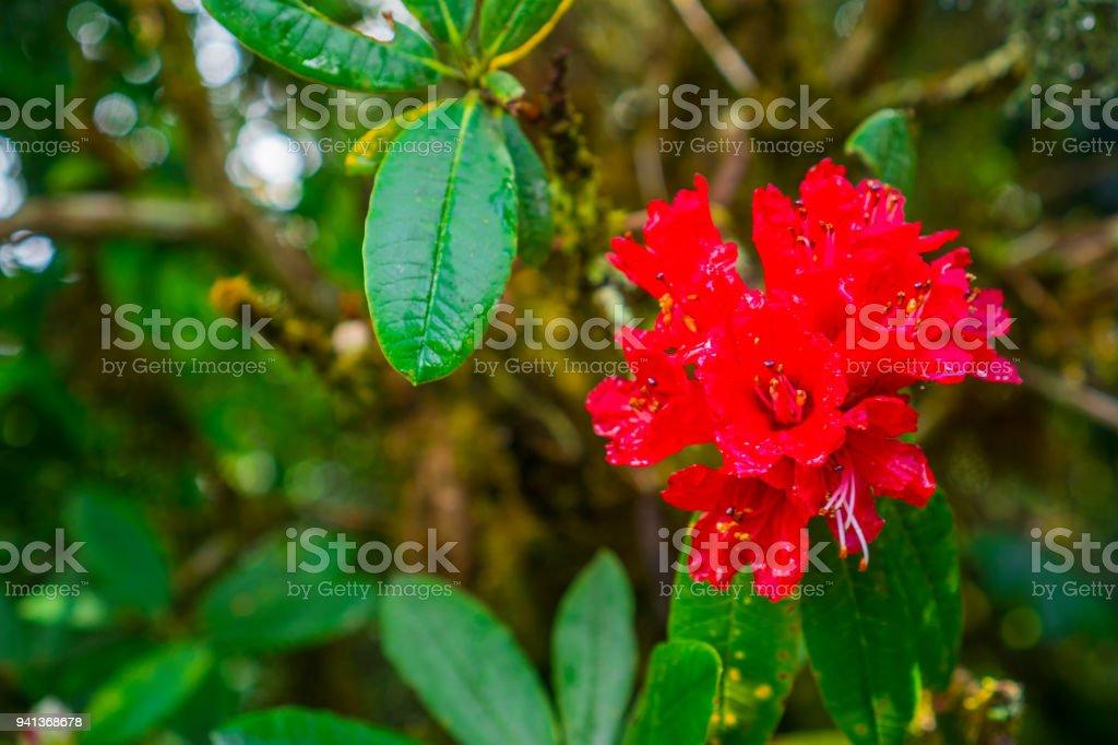 Floral Fond Jardinage Avec Variété De Fleurs De Jardin Colorés Et ...