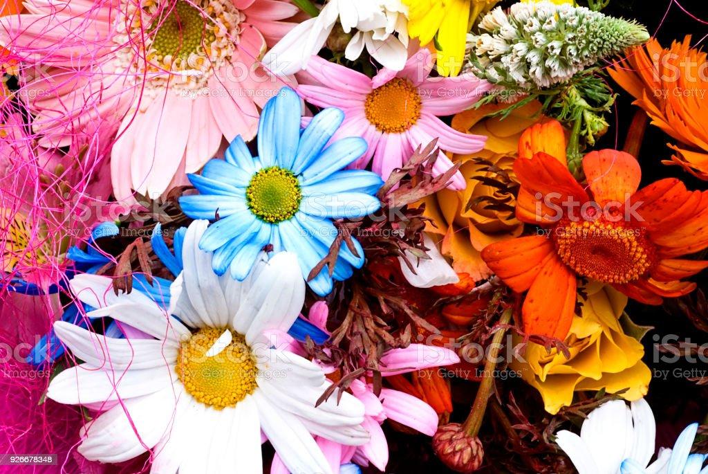 Floral gerberas pattern. stock photo