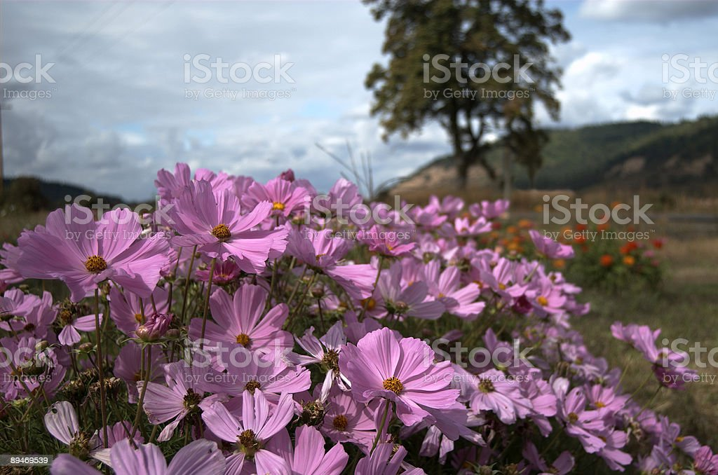Floral Landscape royalty-free stock photo
