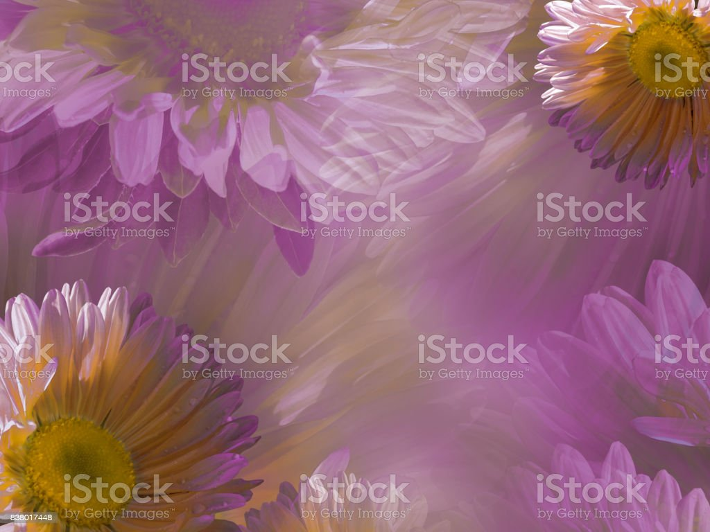 Floral Light Pinkwhite Beautiful Background Of Daisy Wallpapers Of