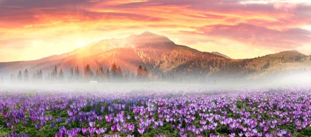 Floral mountain spring stock photo