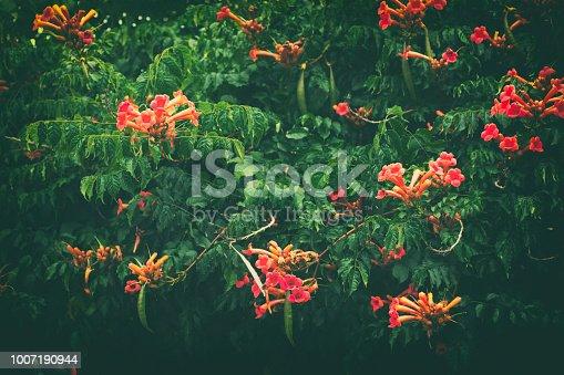 Beutiful floral bush background