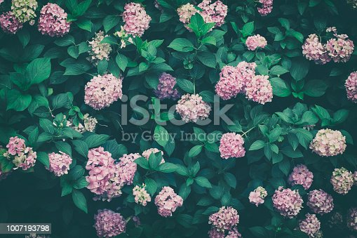 Beutiful floral bush background