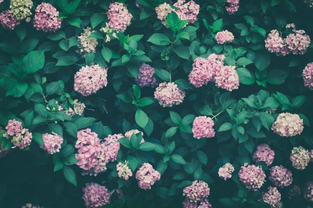 Floral nature wall picture id1007193798?b=1&k=6&m=1007193798&s=612x612&w=0&h=vdm2vn7xsvlpyix44waa1gimao7j160fz2f4oktp bc=