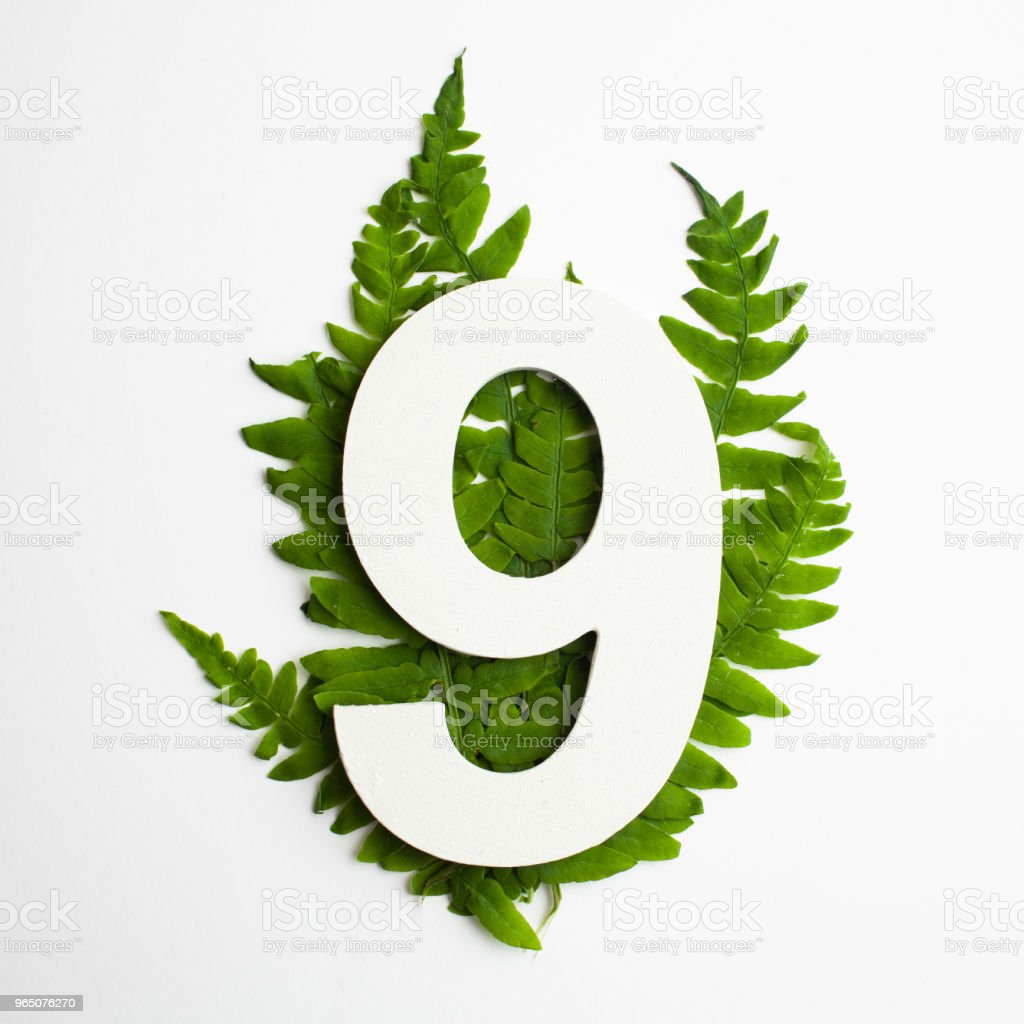 Floral number nine. Beautiful green leaves and fern foliage numbers. zbiór zdjęć royalty-free